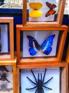 Lima Craft Market - Creepy Crawlies