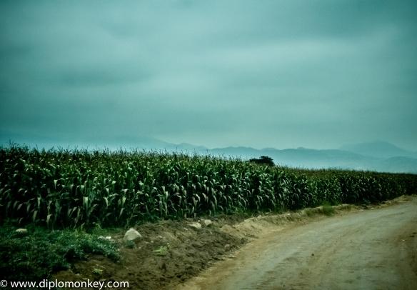Canete Corn Field